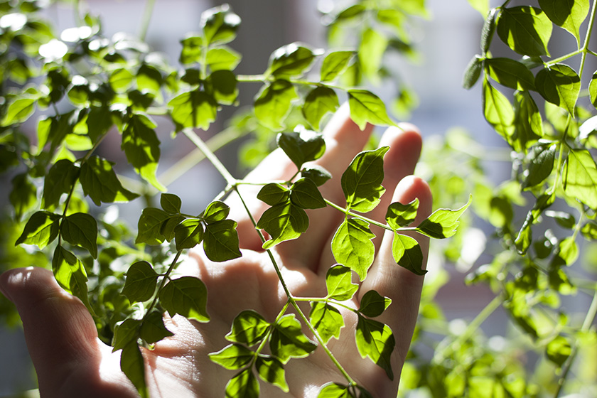 A hand gently holding part of a leafy, vibrant green plant. Everything is lit by bright sunlight, casting dark, dappled shadows.
